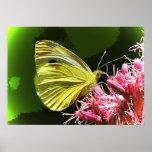 Impresiones de la mariposa de azufre