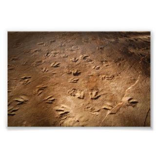 Impresiones del pie del dinosaurio fotografías
