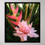 Impresiones hawaianas del poster del jengibre rosa