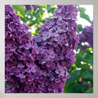 Impresiones púrpuras del poster de las lilas