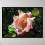 Impresiones y posters del rosa que despliegan
