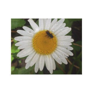 Impression in Canvas- Bee in the Daisy Canvas Print