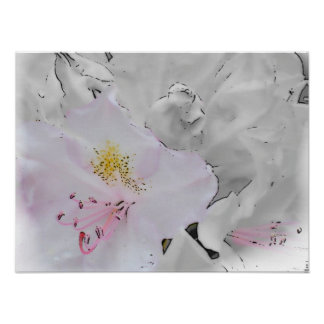 Impression of a White Rhodie Poster