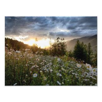 "IMPRIME el ~ ""una puesta del sol de la margarita "" Fotografias"