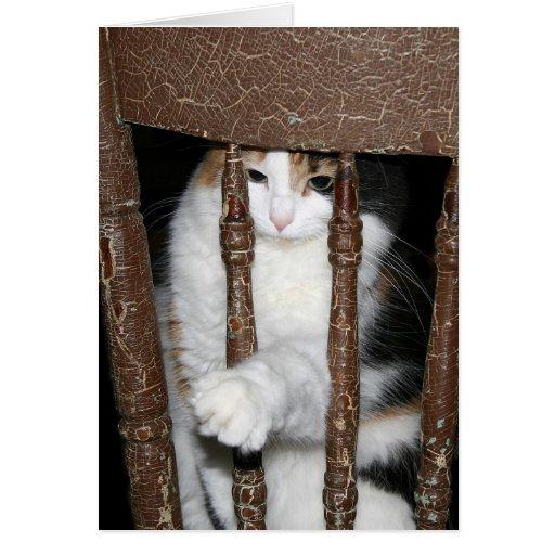 Imprisoned Cards