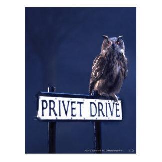Impulsión de Privet Postales