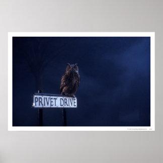Impulsión de Privet Póster