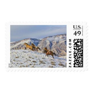 Impulsión del caballo a través de la nieve 3 sello