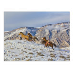 Impulsión del caballo a través de la nieve 3 tarjeta postal