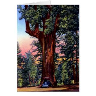 Impulsión Thr de la secoya del árbol de la lámpara Tarjeta De Felicitación