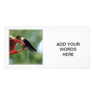 ¡Impulso del colibrí Tarjetas Fotograficas