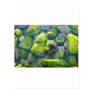 Imu Rocks Postcard