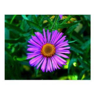 In a Purple Mood Postcard