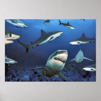 In amongst the sharks poster