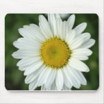 In Bloom Mouse Pad
