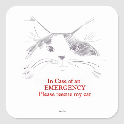 In case of an emergency please rescue my cat square sticker