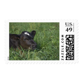 In Chinese zodiac, 2009 is year of ox. Postage