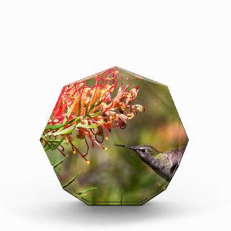 In flight Hummingbird feeding Award