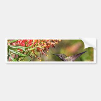 In flight Hummingbird feeding Bumper Sticker