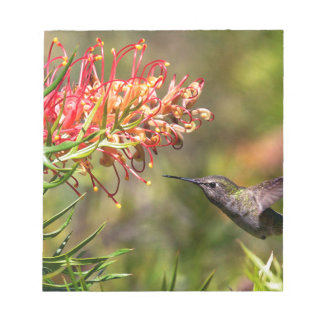 In flight Hummingbird feeding Notepad
