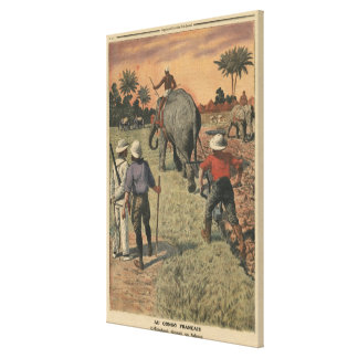 In French Congo, elephant trained to ploughing Canvas Print