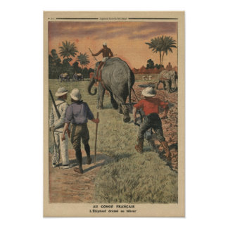 In French Congo, elephant trained to ploughing Poster