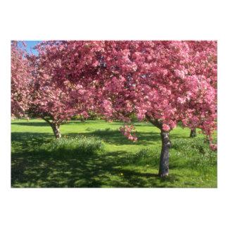 In full bloom, Niagara Falls flowers Announcement