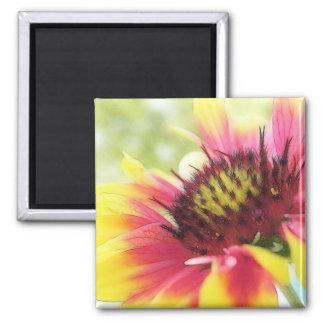 In Full Bloom - The Gaillardia Magnet