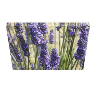 In Lavender Canvas Print