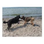 In Love German Shepherds Postcards