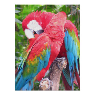 In Love Parrots Print