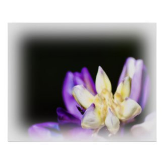 In Love with Lupine White Vignette Poster