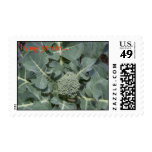 In my garden... postage stamps
