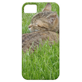 In Nap in Fatty the iPhone SE/5/5s Case