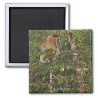 in rain forest, Borneo Island, Malaysia 2 Inch Square Magnet