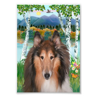 """""""In the Birches"""" with Collie Photo Print"""