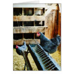 In the Chicken Coop Card