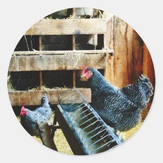 In the Chicken Coop Classic Round Sticker