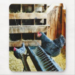 In the Chicken Coop Mouse Pad
