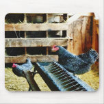 In the Chicken Coop Mousepads