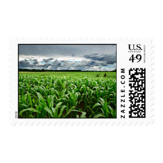 In The Corn Field Postage