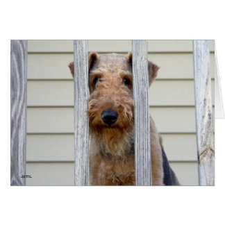 """""""In the Doghouse"""" Card"""