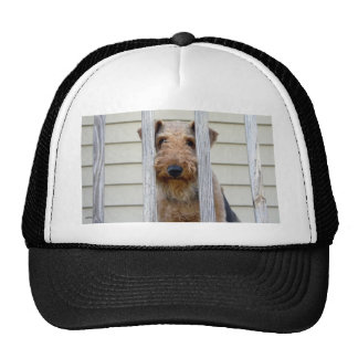 In the Doghouse Hats