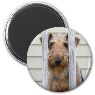 """In the Doghouse"" Magnet"