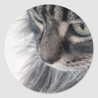 In the eyes of an animal classic round sticker
