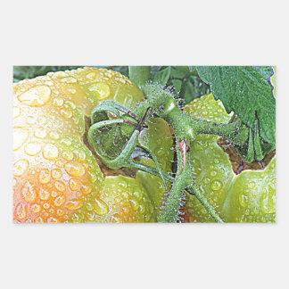 In The Garden Tomatoes Shop Local Photo Design Rectangular Sticker