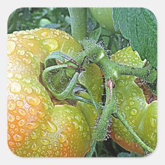 In The Garden Tomatoes Shop Local Photo Design Square Sticker