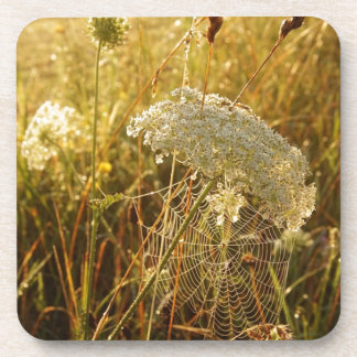 In the golden glow of morning  Queen Anne's Lace Coaster