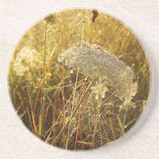 In the golden glow of morning  Queen Anne's Lace Drink Coaster