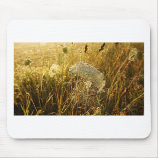 In the golden glow of morning  Queen Anne's Lace Mouse Pad